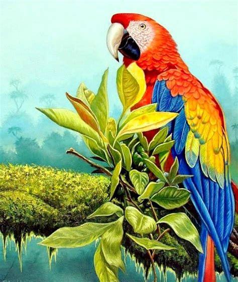 imagenes animales exoticos hermosos im 225 genes arte pinturas cuadros de aves ex 243 ticas al oleo
