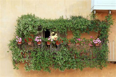 piante perenni da terrazzo piante ricanti da terrazzo pollicegreen