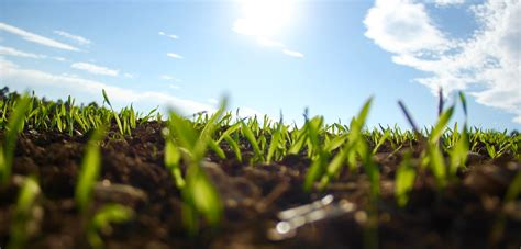Slit Sweeter Premium seeding lawn care and lawn fertilization programs in the greater cleveland oh area