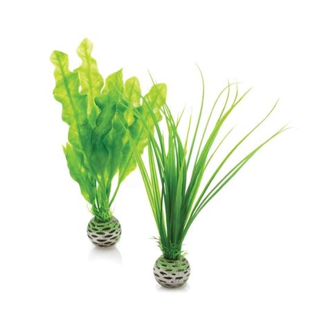 easy plants biorb easy plants small 163 5 5 garden4less uk shop