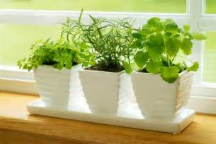 herb garden plants how to grow herbs indoors bonnie plants