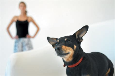 is it normal for puppies to diarrhea diarrhea at home treatment and when to see a vet