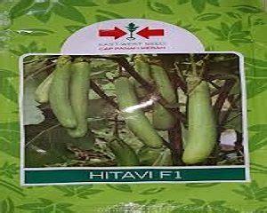 Benih Terong Genjah 4 jenis benih terong terbaik dan tahan penyakit untuk