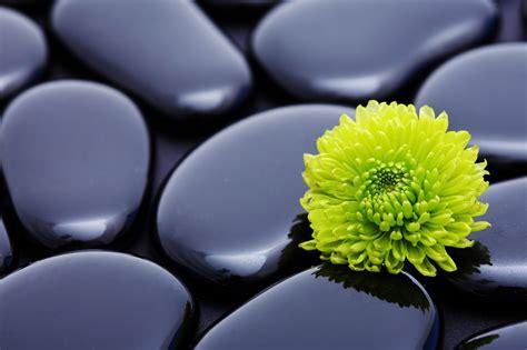 wallpaper green flower green flowers hd 11 wide wallpaper hdflowerwallpaper com