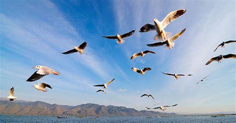 imagenes de animales que migran migraci 243 n animal historia de la vida