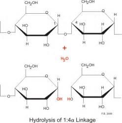 3 carbohydrates exles hydrolysis diagram 28 images intermediate 2 bitesize