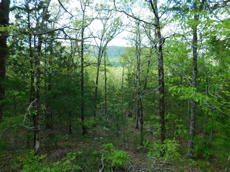 Newton County Arkansas Property Records Lot 3 Arkansas Ozark Mountains Newton County Property Land For Sale
