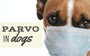 dog vaccinations   caninejournalcom