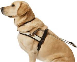 Dog Guide Dog Access Guide Dogs Victoria