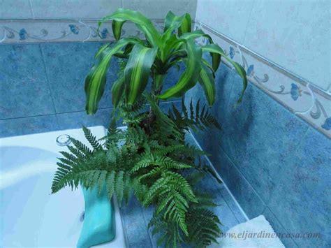 olguchiland las plantas ii plantas para decorar el ba 241 o ii el jardin en casa