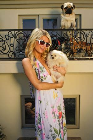paris hilton dog house paris hilton stalker arrested again l a now los angeles times