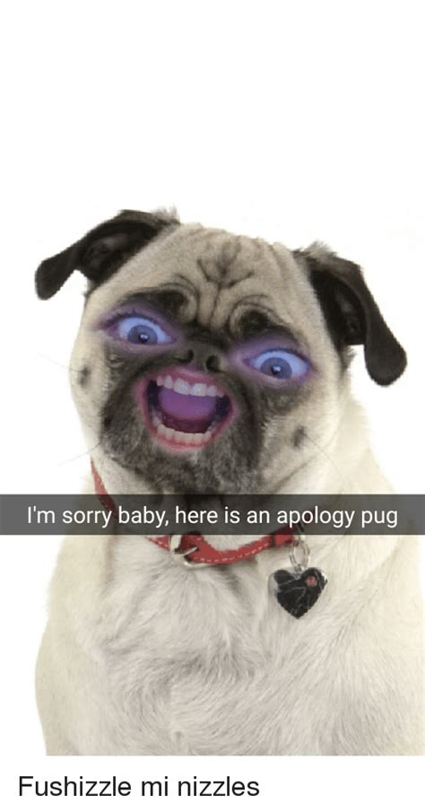 sorry pug apology memes of 2016 on sizzle relationships