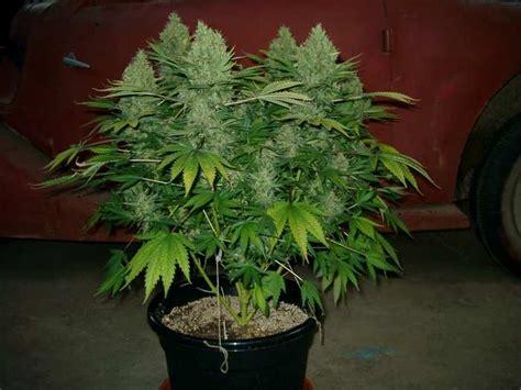 plant lovers plant lovers gearslutz com