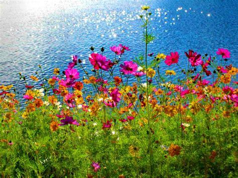 imagenes bonitas de paisajes y flores paisajes de flores fotografias y fotos para imprimir