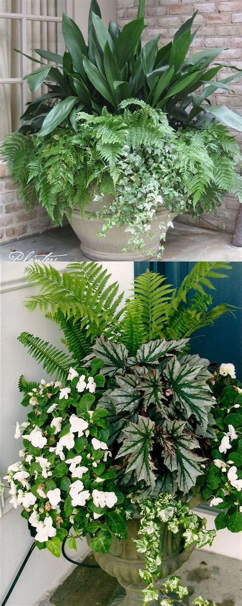 Design For Potted Plants For Shade Ideas Best 25 Front Door Plants Ideas On Front Door Planters Front Porch Planters And