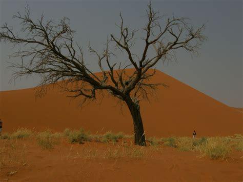 turisti per caso namibia deserto namib viaggi vacanze e turismo turisti per caso