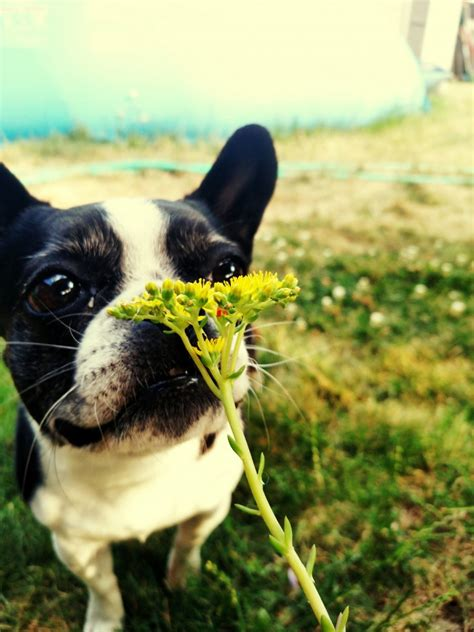 how to help allergies summer allergies in dogs how to offer your relief