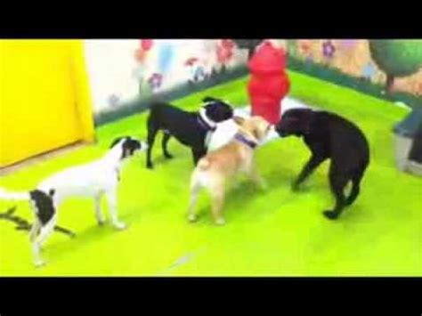 My Pet Garden by Playtime At Doggie Daycare My Pet Garden Pasadena Ca