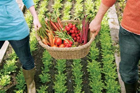 Vegetable Gardening Tips Vegetable Garden Tips Garden Shop