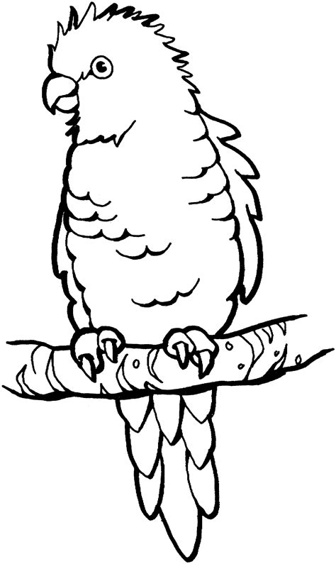 coloring image parrot free parrot and macaw coloring pages