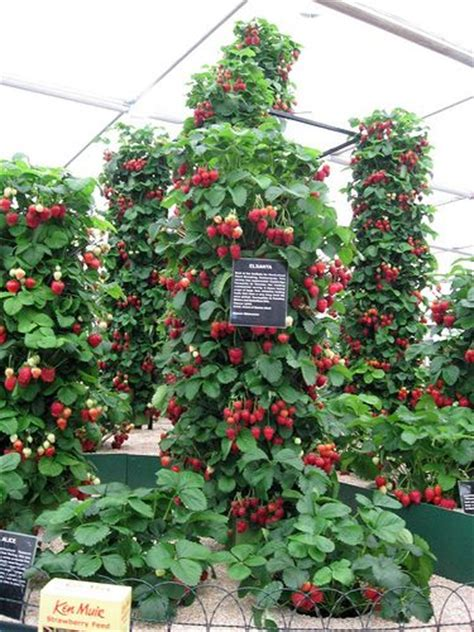 Strawberry Vertical Garden Strawberry Towers Edible Landscapes Yes There Pretty
