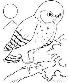 free parrots birds coloring pages