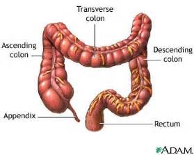 large bowel resection series the large bowel large