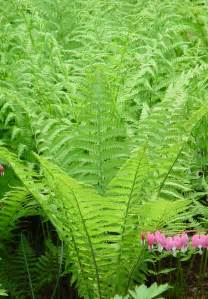 garden tips fern plants interior design inspiration