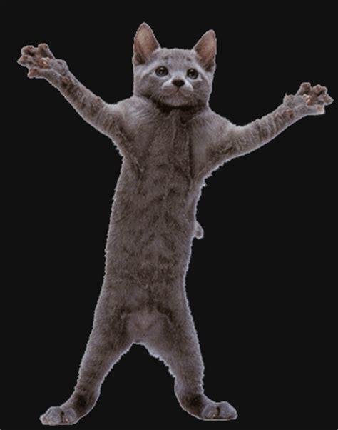 Dancing Cat Meme - dancing cat animation memes
