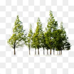 trees png & trees transparent clipart free download tree