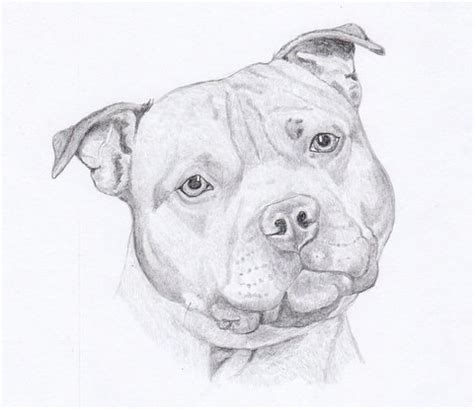 staffordshire bull terrier note cards gift set of eight