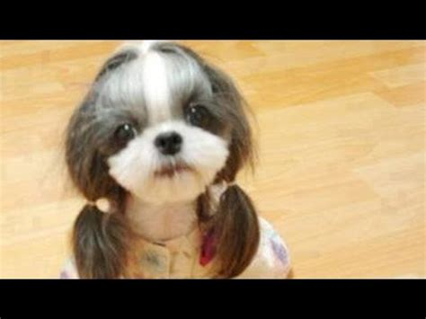 worlds cutest dogs youtube