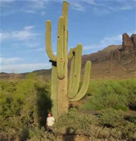 imagenes de animales y plantas del desierto la vida en los desiertos animales plantas y ecolog 237 a