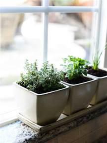 how to start an indoor herb garden kitchen confidante 174