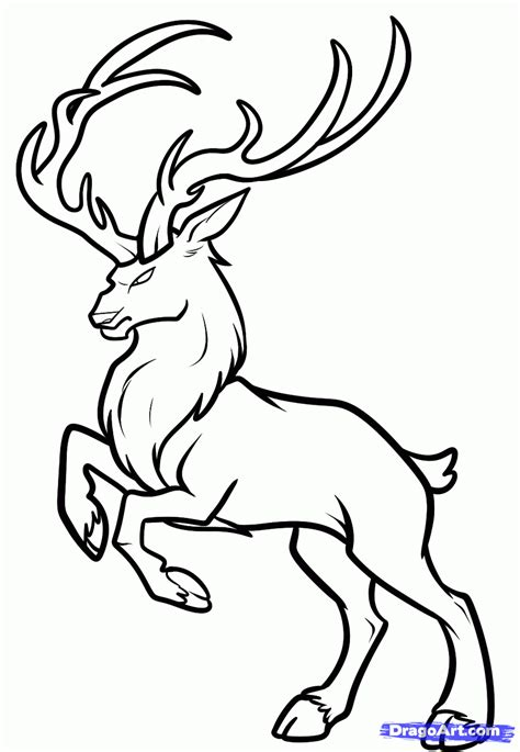 coloring pages of deer bucks deer skull drawing clipart panda free clipart images