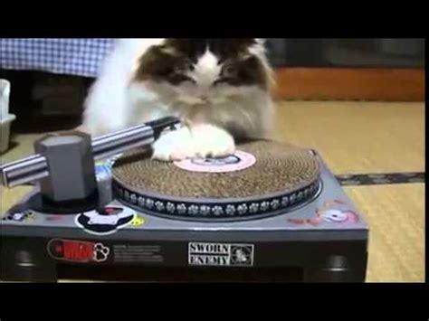 cat scratch dj deck cardboard cat scratch dj deck scratching pad