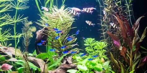 aquarium design delhi aquarium stone sagar fish aquarium