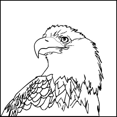Printable Bald Eagle Coloring Pages Coloring Me Eagle Coloring Page