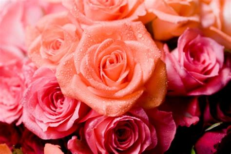 conservazione fiori recisi fiori come far durare a lungo quelli ricevuti a san