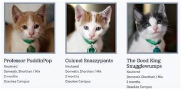 we demand more clever cat names