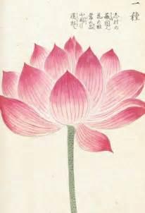 Lotus Print Honzo Zufu Lotus Kan En Iwasaki Kew Gardens