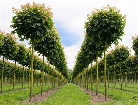 Giesebrecht Garten Und Pflanzen by Gartenb 228 Ume