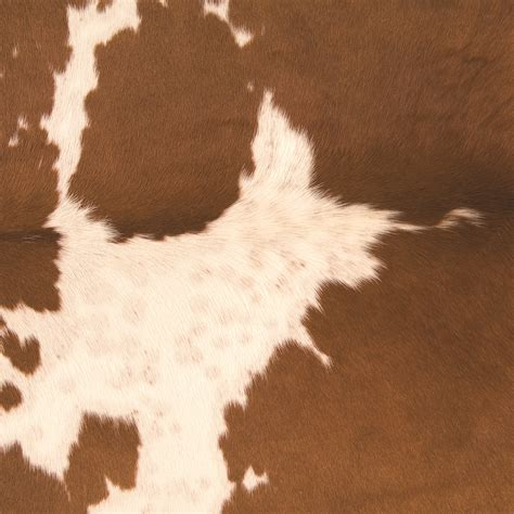 How To A Cowhide - cowhide fabric industries
