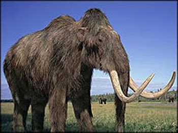 Fosil Gajah Daging mystery solved why mammoths were humped