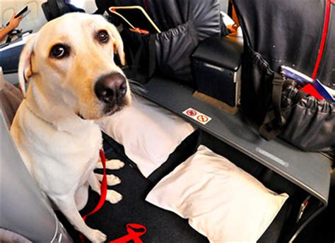 service dogs on planes service registration and emotional support registration benefits