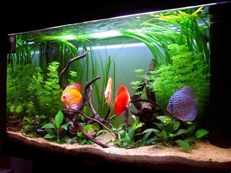 ghiaia per acquario acqua dolce temperatura acquario acqua dolce accessori per acquario