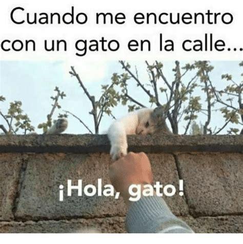 cuando me converti en 8467861509 cuando me encuentro con un gato en la calle hola gato con meme on sizzle