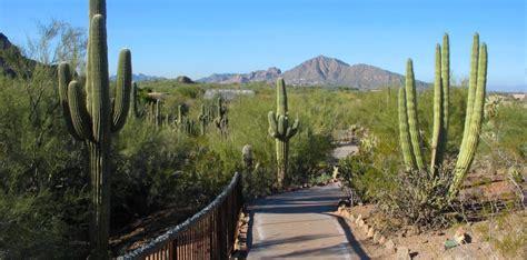Desert Botanical Gardens Az Desert Botanical Garden Arizona Photos In February 2008