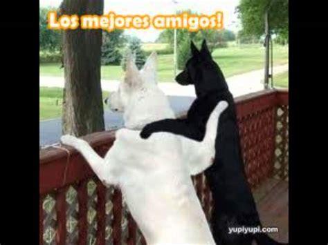 imagenes chistosas las mejores del mundo imagenes chistosas de perros youtube