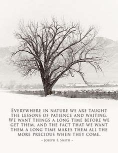 strength from nature simple lessons of taught by the most unlikely masters the nature teachers books 1000 images about nature quotes on nature